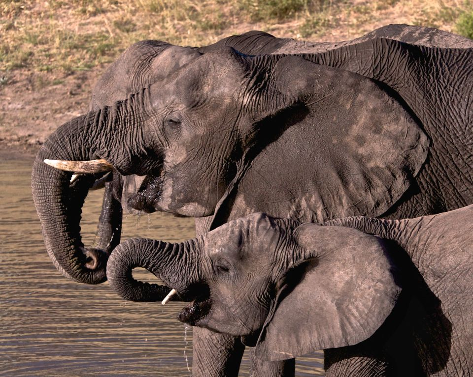 UK could completely ban ivory trade by 2018